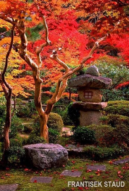 Jardim Zen  Aido Bonsai