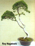 roy-nagatoshi03