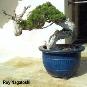roy-nagatoshi04