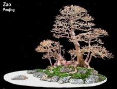 bonsai5