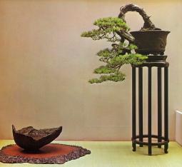 Needle pine