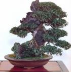 Chirimen kazura - 80 anos - 40cm