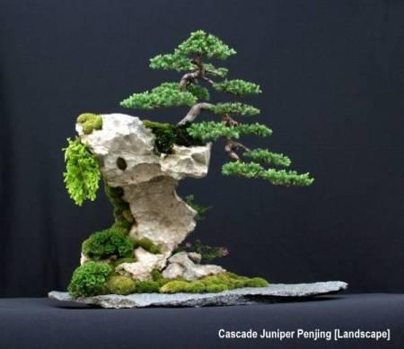 junipercascademx2