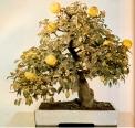 Chaenomeles japonica - 65 anos - 48cm