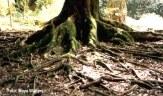 rootsoil