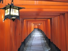 torii gates fushimi inari kyoto japan