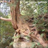 tree_roots_330_330x330