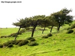 Effect_of_wind_on_trees