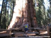 General Sherman Sequoia Park USA