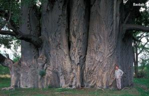Grootboom