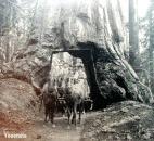 redwood-wagon