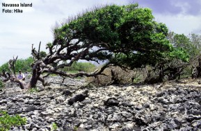 TreeWind