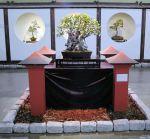2008_philadelphia_bonsai_001