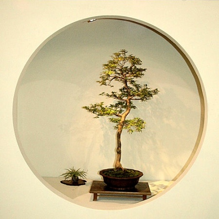 2008_philadelphia_bonsai_004