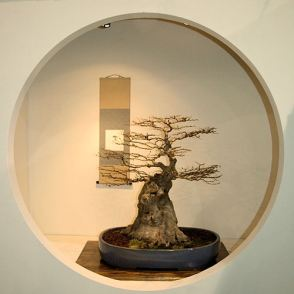 2008_philadelphia_bonsai_006