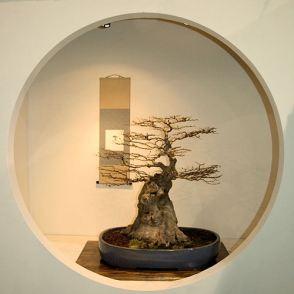 2008_philadelphia_bonsai_006