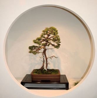 2008_philadelphia_bonsai_007