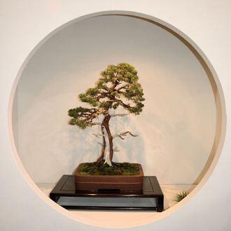 2008_philadelphia_bonsai_007