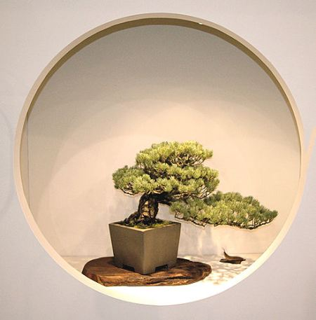 2008_philadelphia_bonsai_014