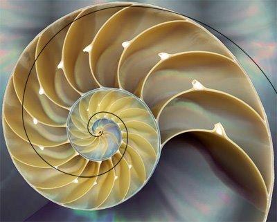 fibonacci-nature-nautilus3