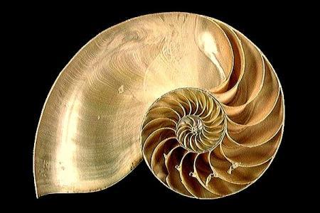 nautilus-c