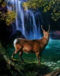 julie_bell_deer