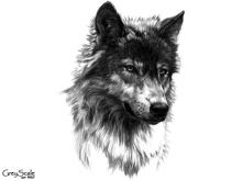 Wolf_GS_117_JulieBell