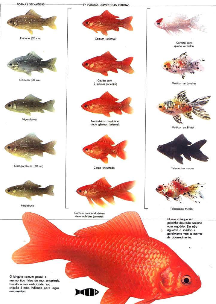 Resultado de imagem para 7. Obtenha peixes para o tipo de água da sua região.
