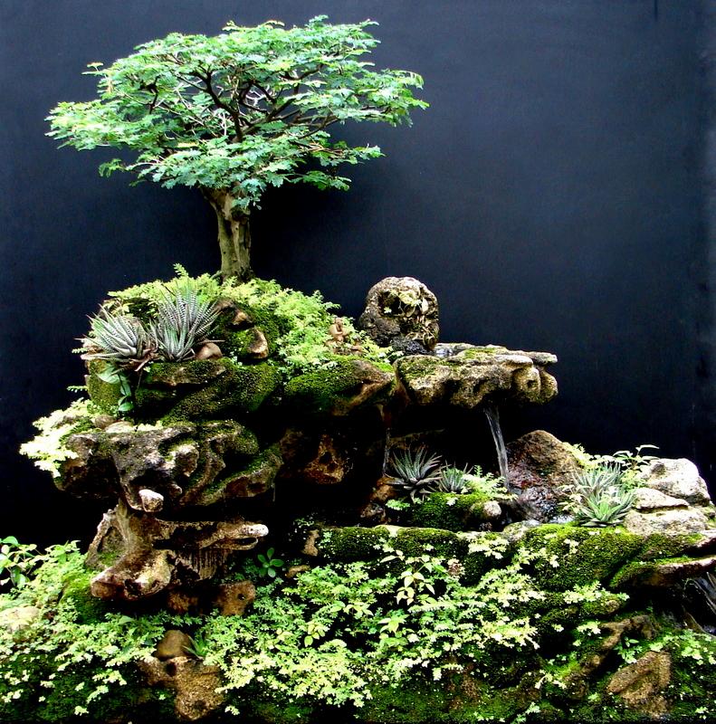 fonte bonsai