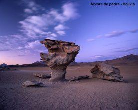 el-arbol-de-piedra