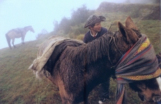 Gordon Miltsie - 2004 - peru - O cavalo de carga foi vendado para se acalmar