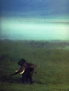 Chris Johns 1988 - Tanzânnia - Nacratera Ngorongoro
