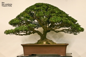 World Bonsai Convention 2009