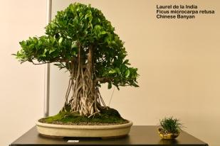 World Bonsai Convention 2009