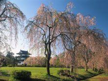Castelo de Hirosaki. Japão
