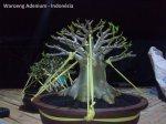 Adenium Obesum - Rosa do Deserto 4