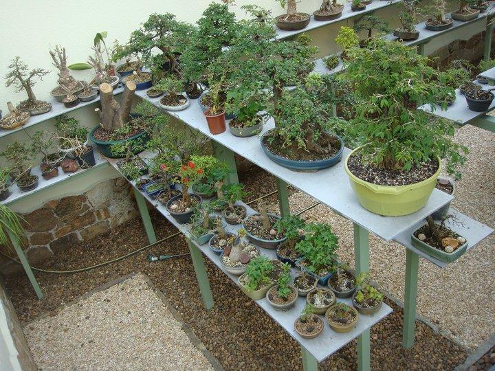 Entrevista com charles white aido bonsai - Como cultivar bonsai ...