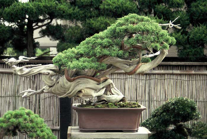 http://aidobonsai.files.wordpress.com/2010/11/dh000015.jpg