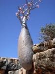 Socotra_Island_12