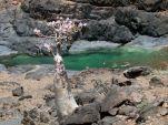 Socotra_Island_14