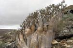 Socotra_Island_16