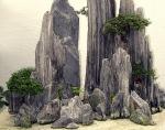 Bonsaï & Penjing – Rockspray cotoneaster – Cotoneastermicrophyl