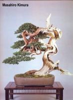 8B - Juniperus Chinesis 78cm