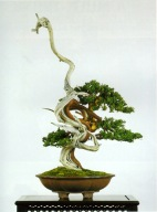 bonsai009
