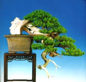 bonsai010