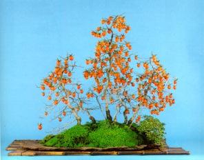 bonsai016