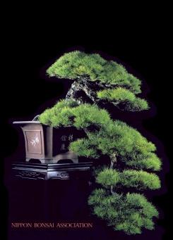 bonsai35a.bmp