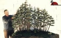 bonsai_bdm_012000