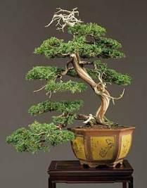 bonsai_gallery_d