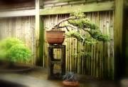 cascade-azalea-in-leal
